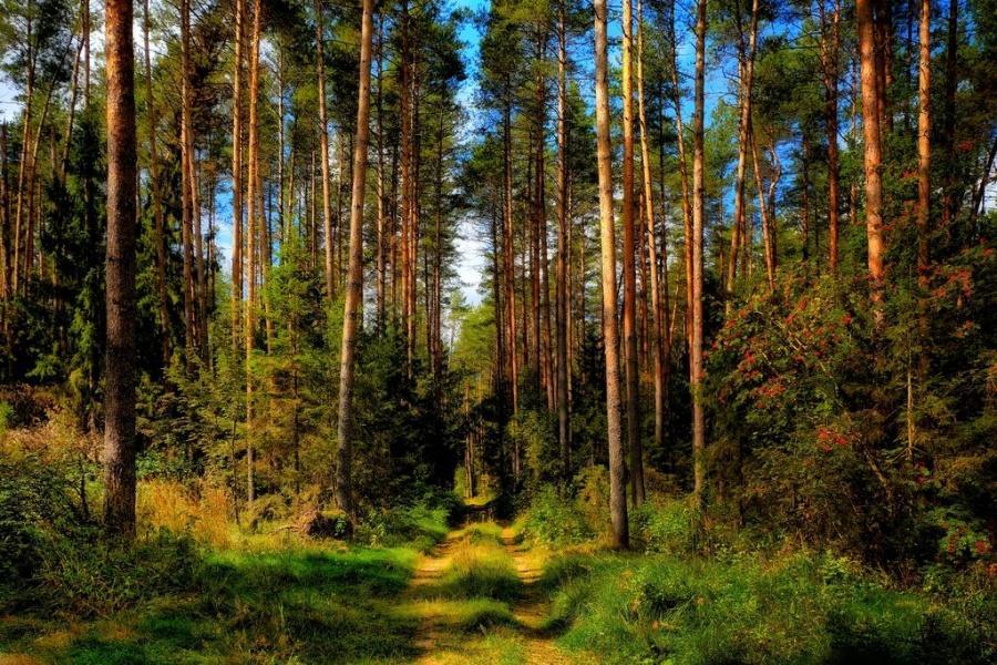 Игорь Руденя поздравил работников лесного комплекса Тверской области