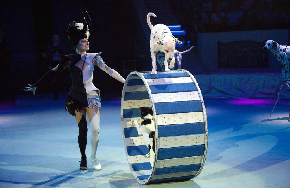 Тверской цирк приглашает в «Звездный круиз»