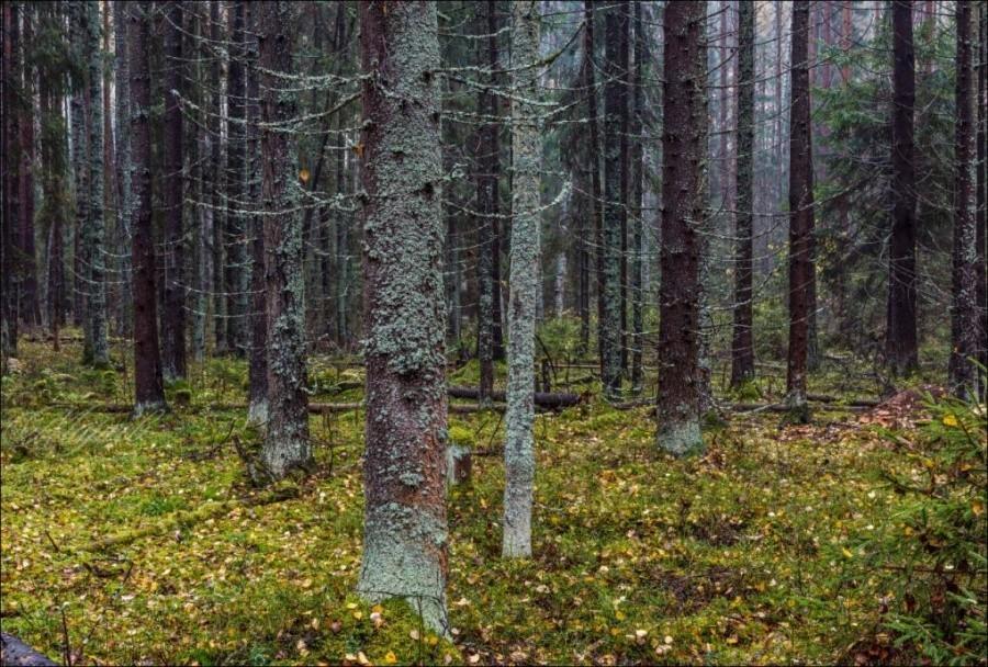 В Тверской области ведется экологическое обследование особо охраняемых территорий