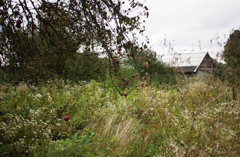 Землевладелец из Торопецкого района привлечен к ответственности за неисполнение предписания