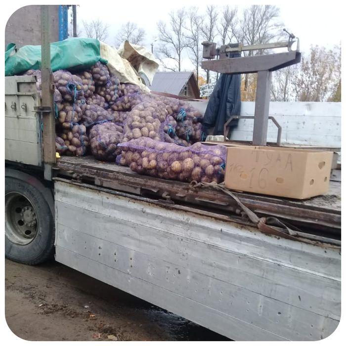 Житель Тверской области торговал картофелем с нарушениями закона