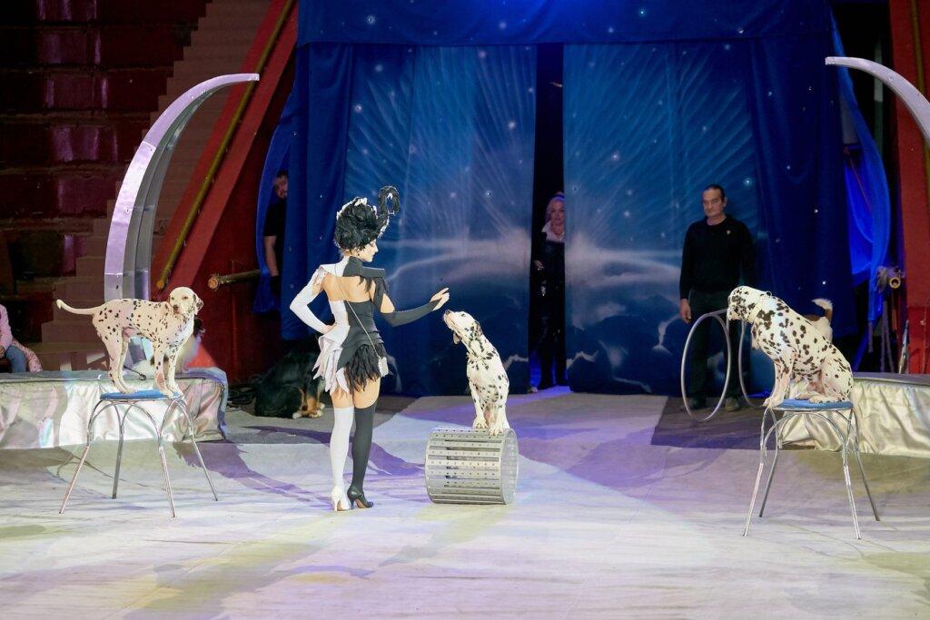 В Тверском цирке пройдет уникальное  шоу «Звездный круиз»