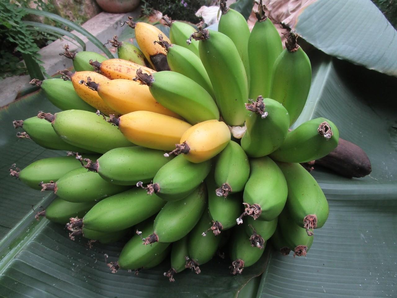 В Твери выросли бананы