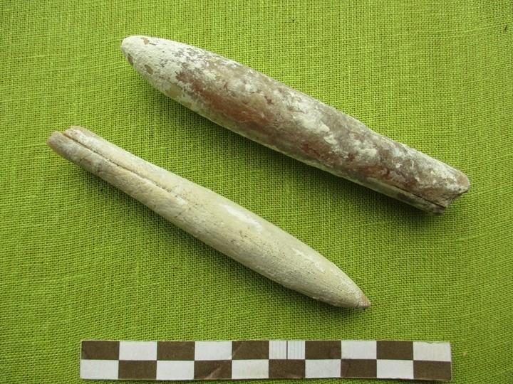 Обломки окаменелой древесины поступили в андреапольский музей