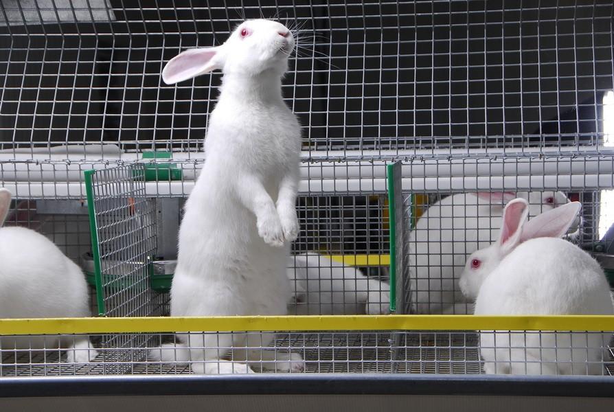 Тверским кролиководам возместят часть затрат
