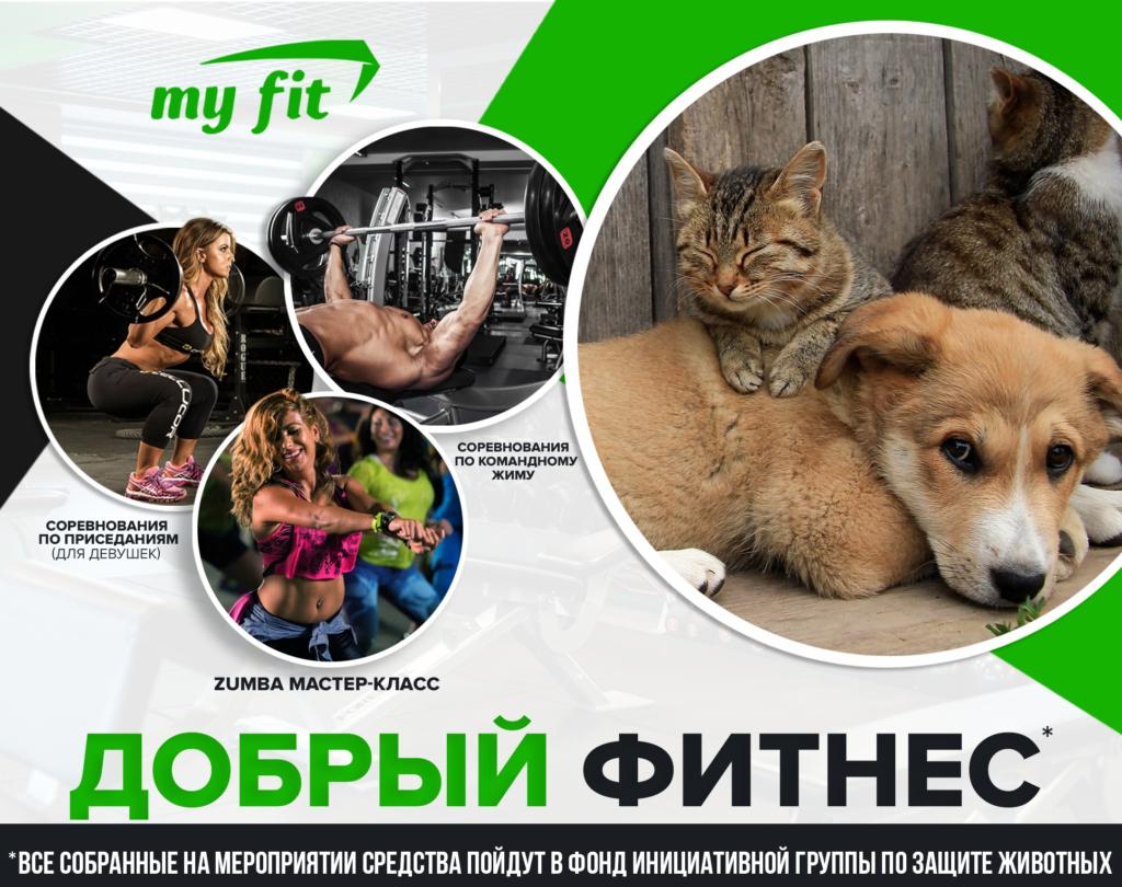 В Твери пройдёт благотворительная фитнес-тренировка в поддержку бездомных животных