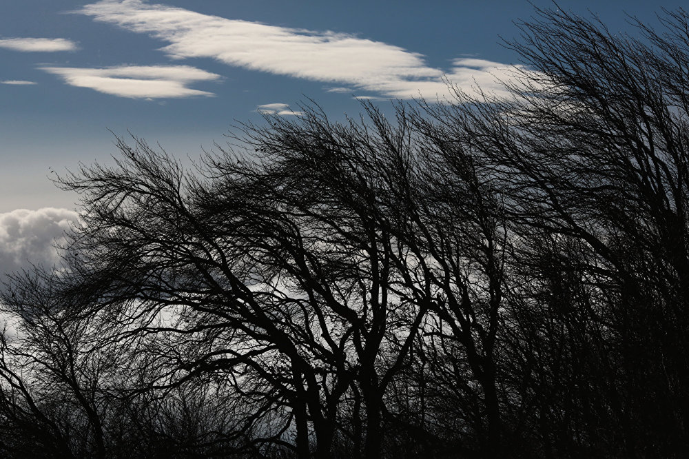 Жителей Тверской области предупреждают о сильном ветре