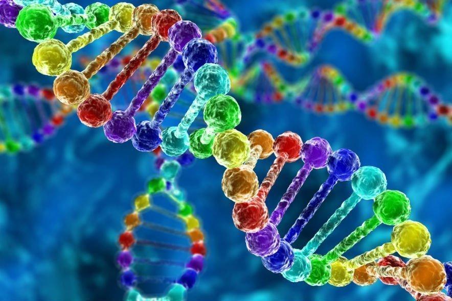 В Тверском лектории расскажут о загадочном геноме