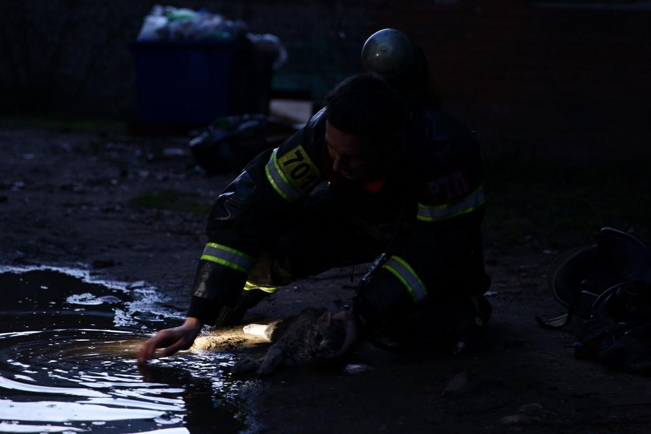 ВТвери пожарный откачал пострадавшего кота