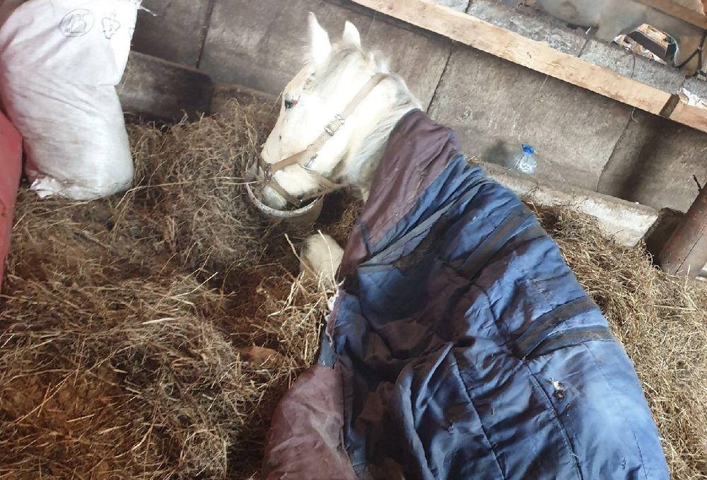 Жительница Твери пытается  спасти травмированную лошадь