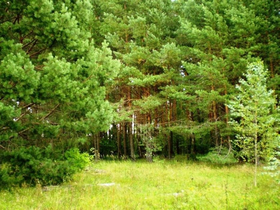 В Тверской области увеличились площади лесного фонда
