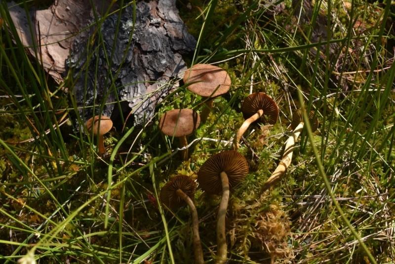 В Центрально-Лесном заповеднике нашли новые виды грибов