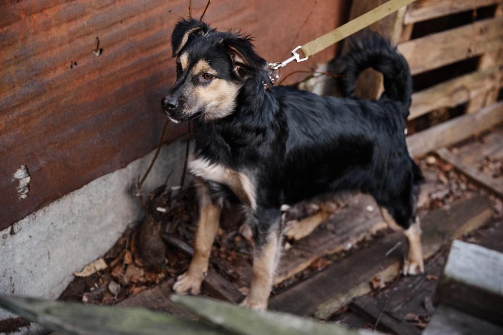 Помоги бездомным собачкам найти свой дом в Твери