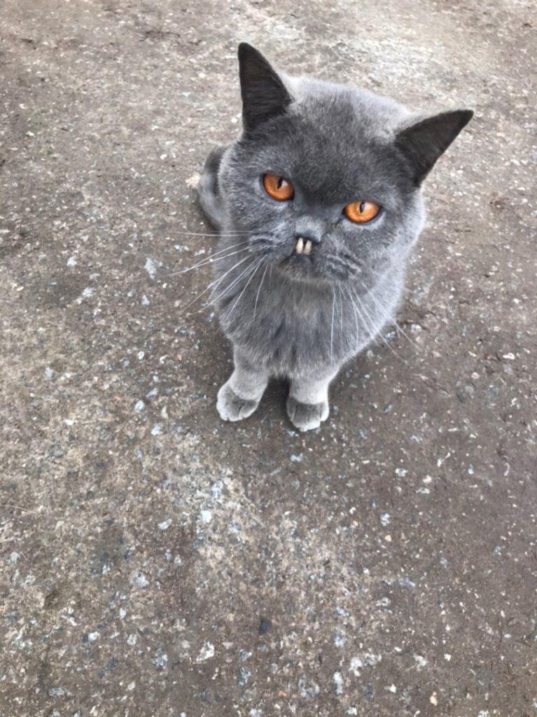 Под Тверью кот-«вампир» нашел себе дом