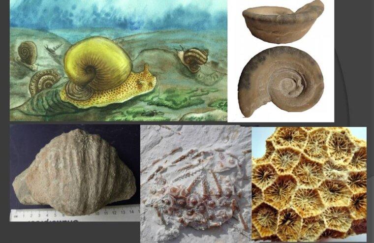 Очень древняя история про Тверскую область: пляжи и морские ежи в Торопце
