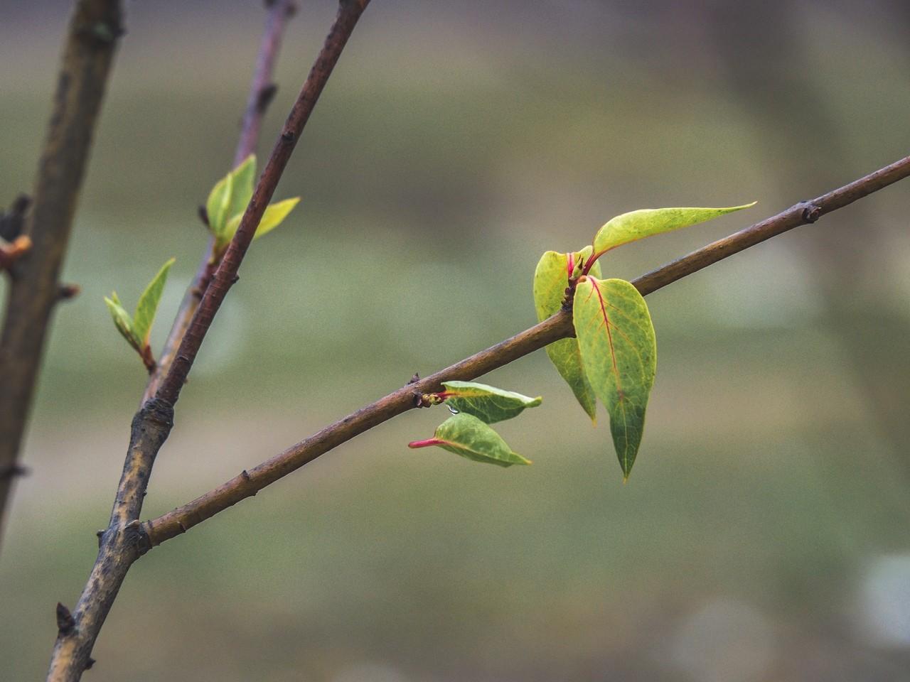Весна в ноябре: в Твери распустились молодые листочки
