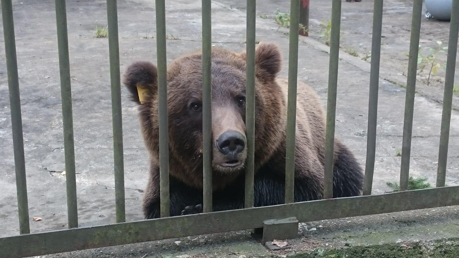 Тверские медвежата пересекли границу и напугали эстонцев