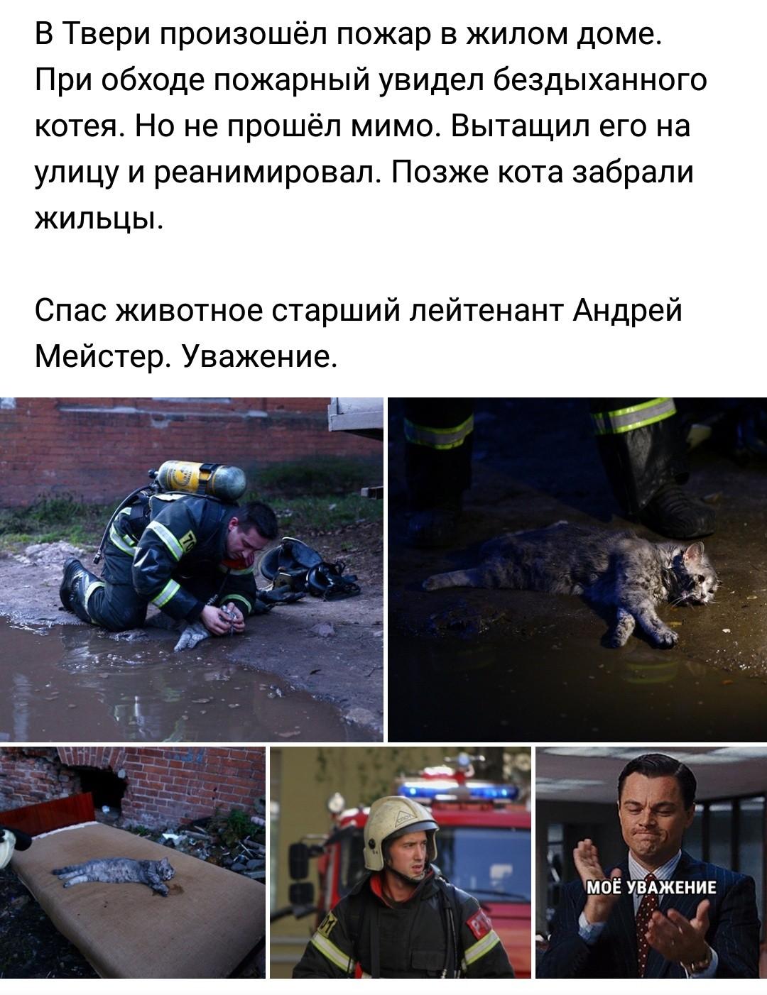 Героический пожарный и спасённый кот из Твери набирают популярность в интернете
