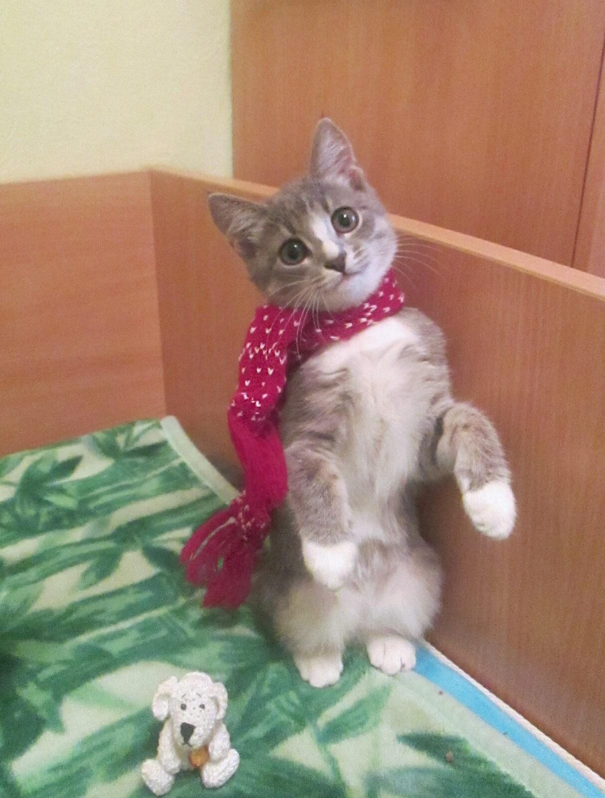 Тверская кошка Мася станет героем программы на Первом канале