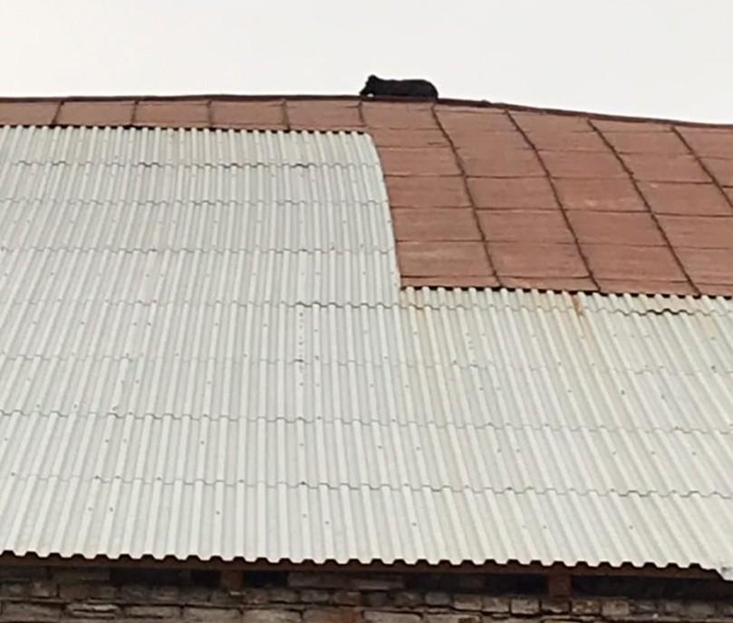 В Твери появился пес, который живет на крыше