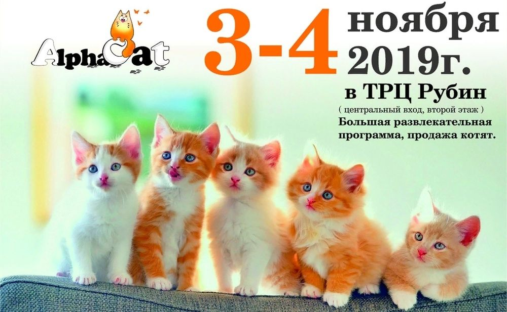В Твери пройдет международная выставка кошек