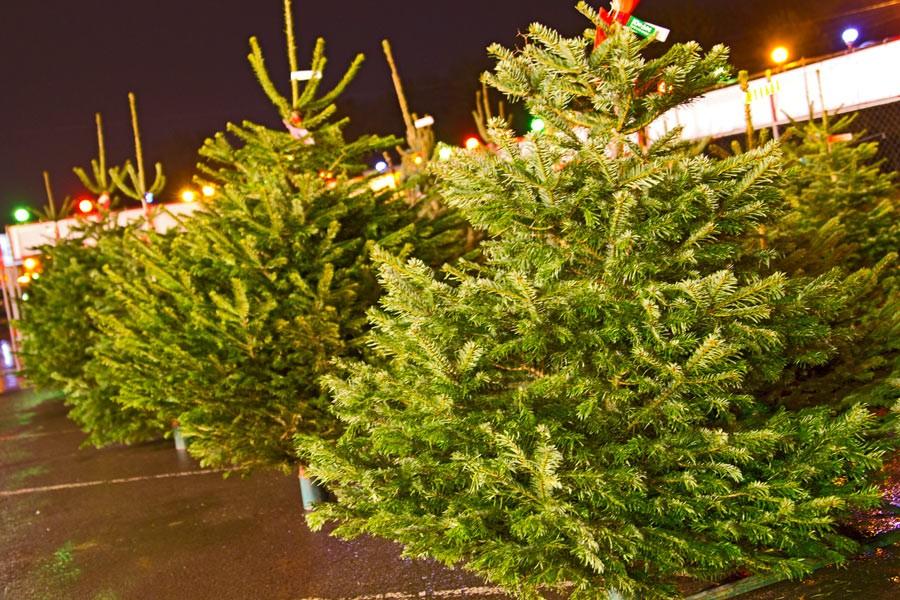 Куда идти за новогодней елкой в Твери