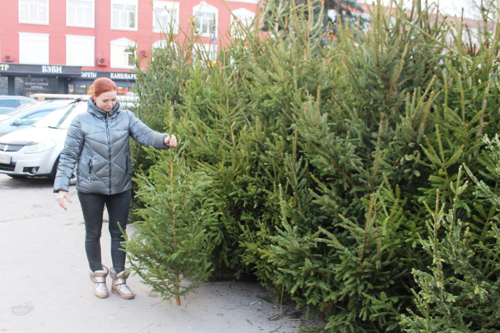 Где в Твери купить новогоднюю ёлочку