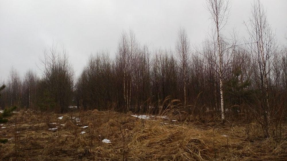 В тверской области собственник убрал мусор, но так и не использует земли с пользой