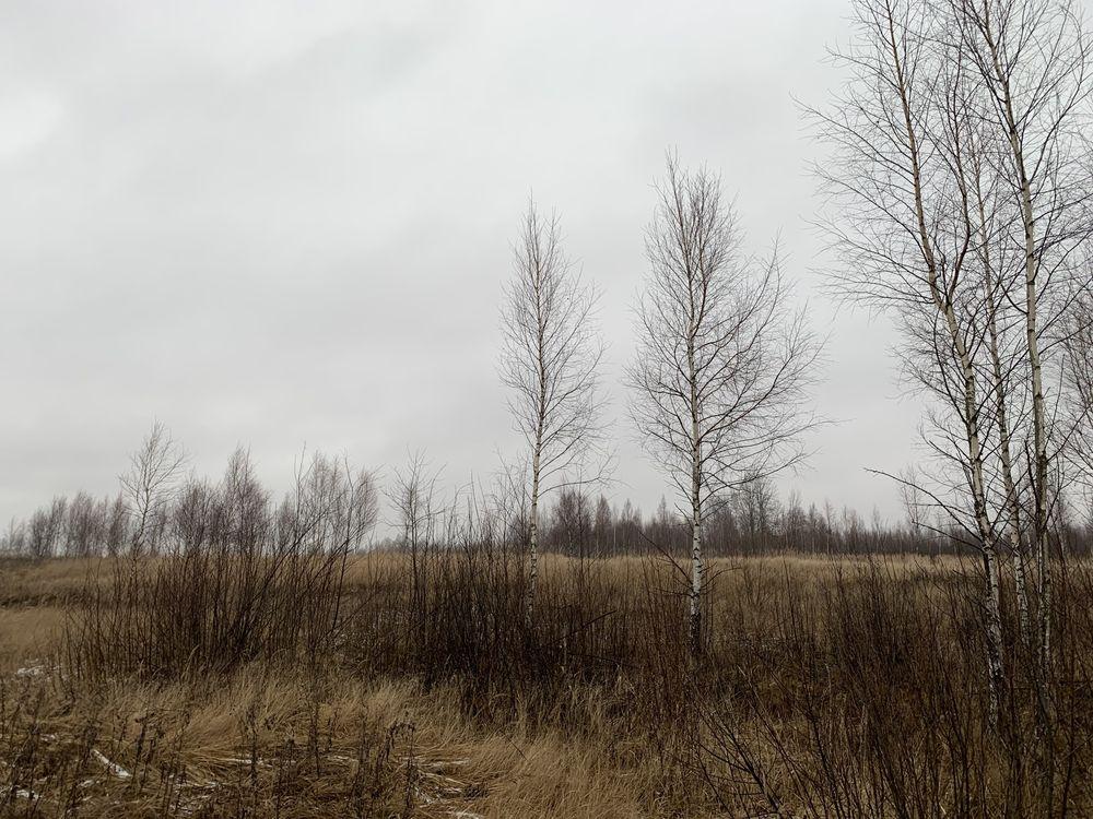 В Зубцовском районе зарастают свыше 95 гектаров сельхозземель