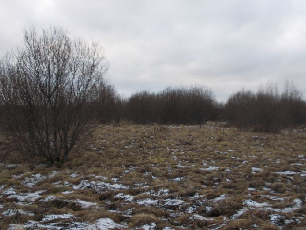В Тверской области зарастают свыше 86 гектаров сельхозугодий
