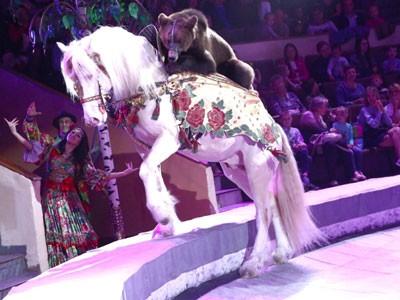Гия Эрадзе привезет в Тверь новогоднее цирковое шоу