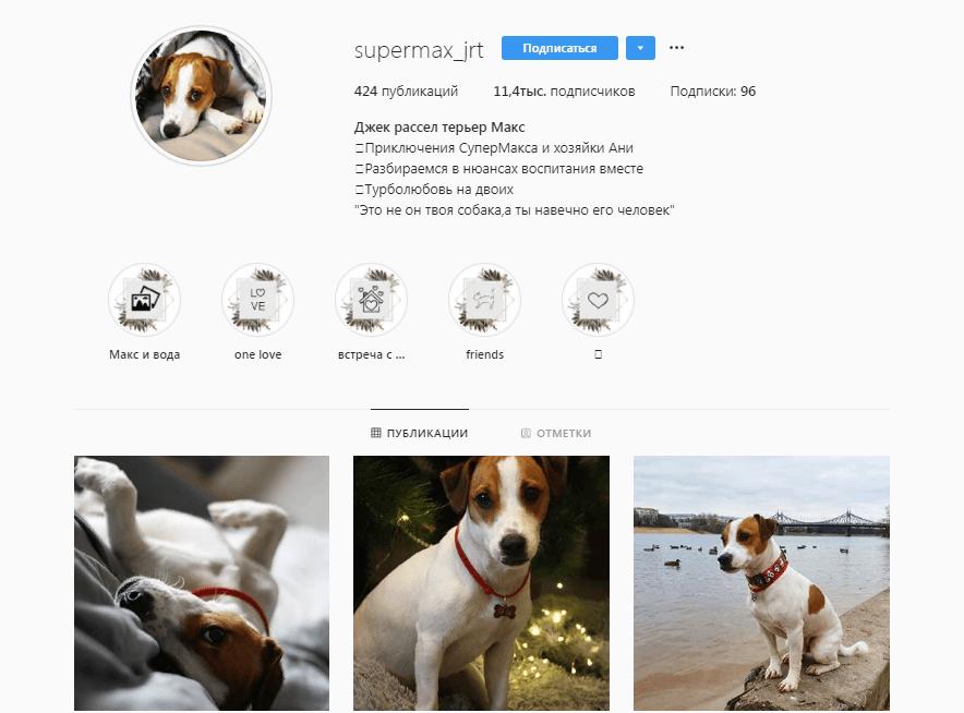 Песик из Твери набрал почти 12 тысяч подписок в Instagram