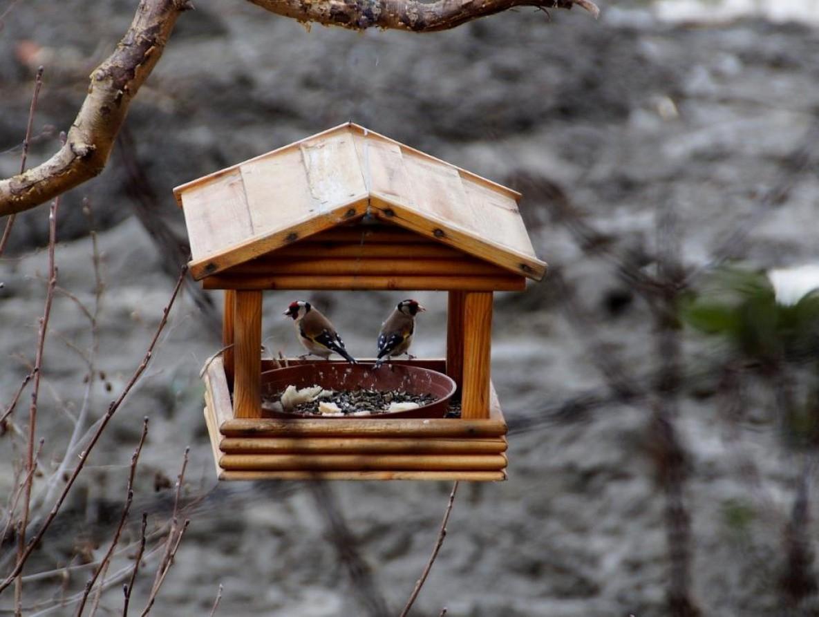 В Тверской области выбирают лучшую кормушку для птиц