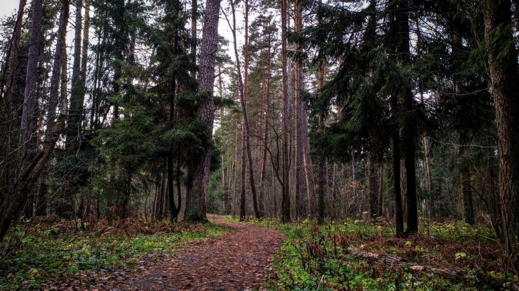 Для лесничеств Тверской области закупят лесопожарную технику