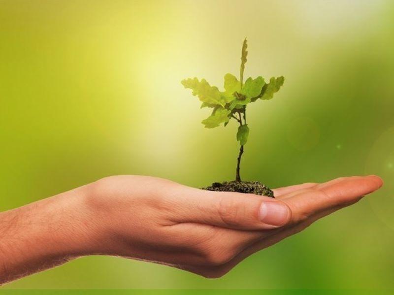 Программа «Год сельской территории» заработает в Оленинском городском округе