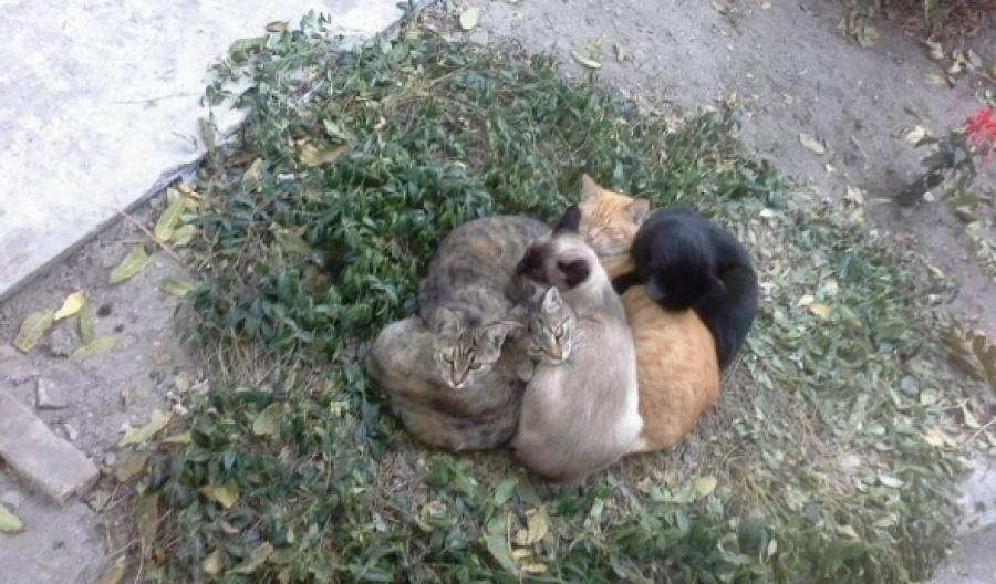 Живодеры травят кошек в Тверской области