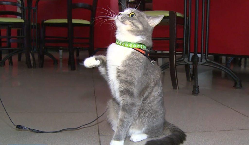 Талантливая кошечка из Твери стала звездой интернета
