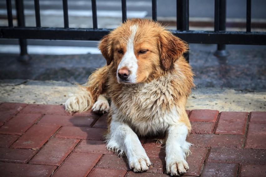 В Твери собак травят ливерной колбасой с таблетками
