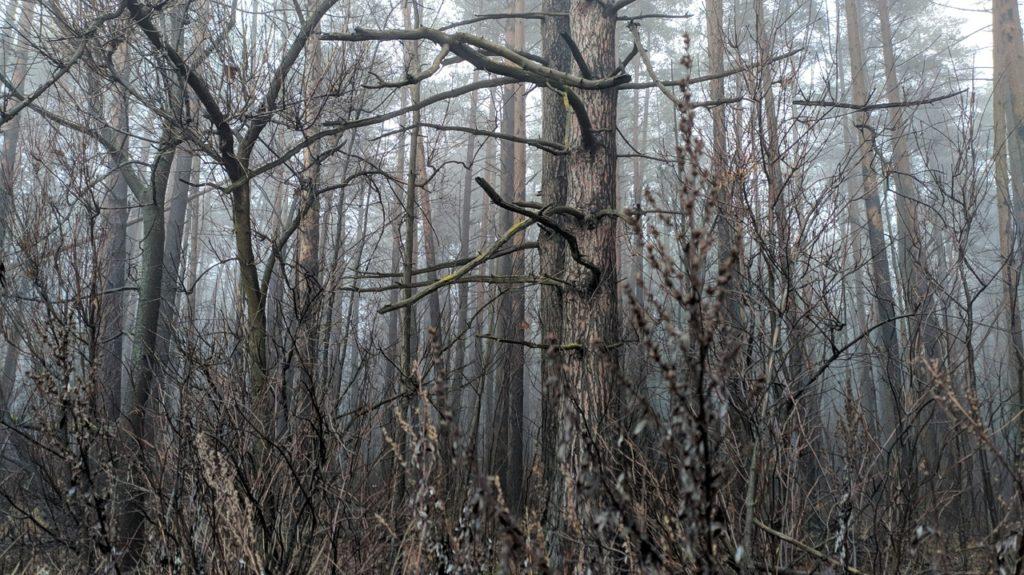 Туман не собирается покидать Тверскую область