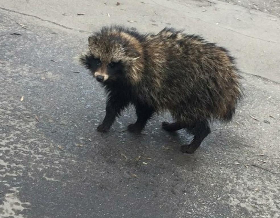 Дикое животное гуляло по рынку в Твери