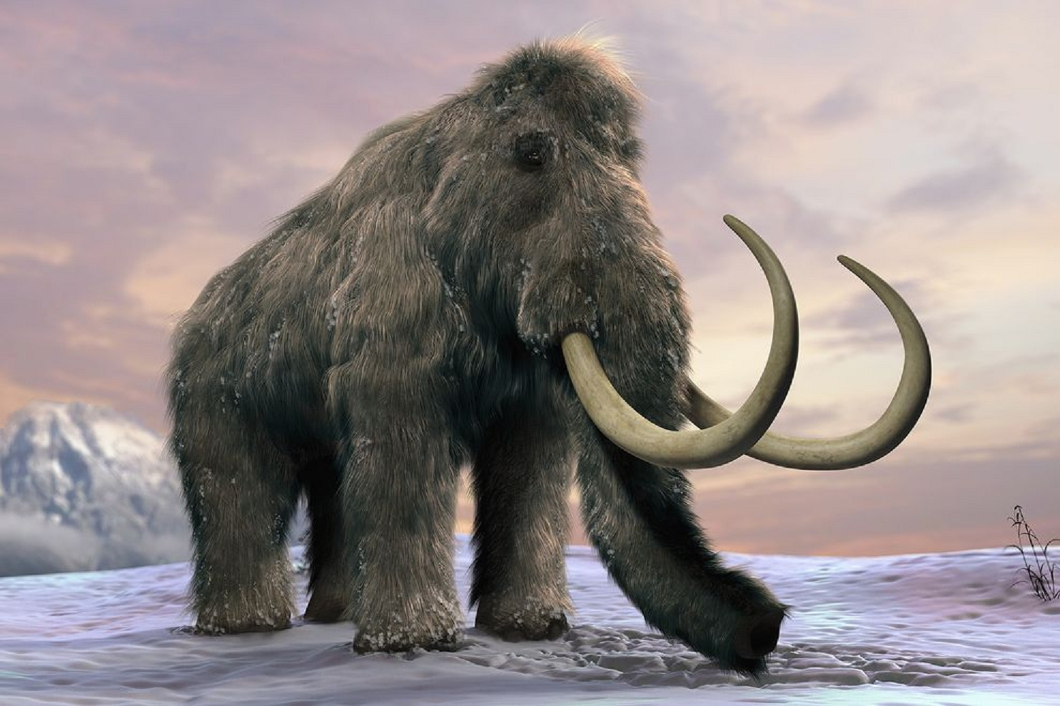 Тверьлайф проведет стрим о мамонтах