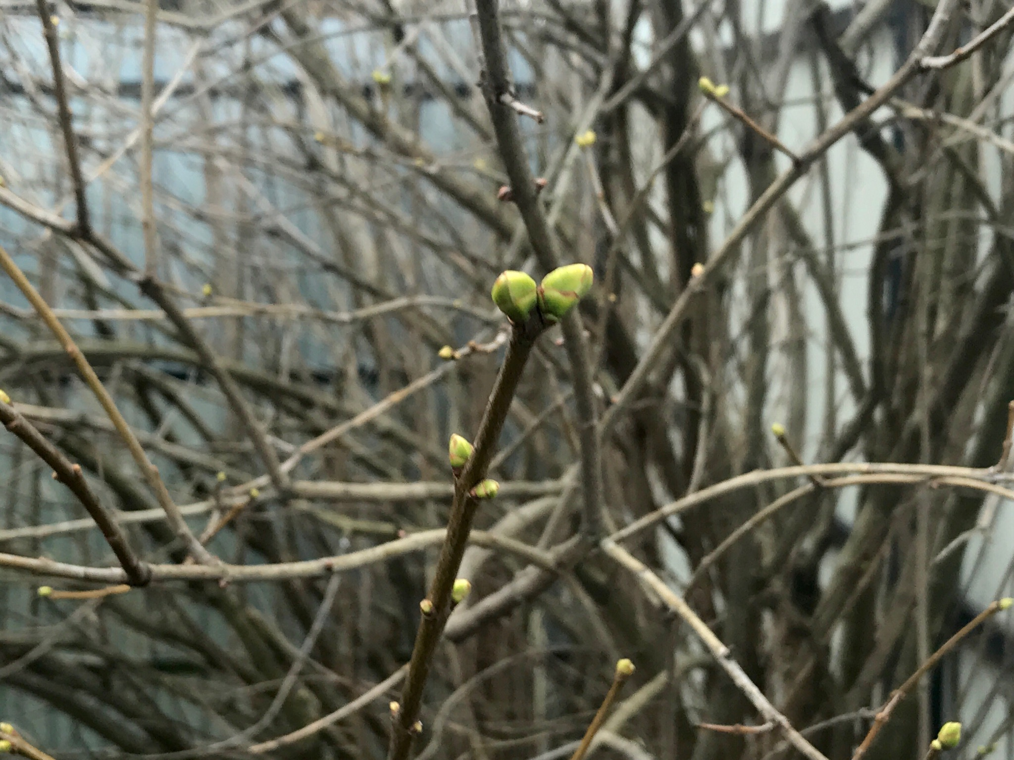 Погода подморозит осмелевшие растения в Твери