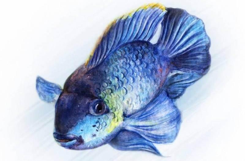 Любителей аквариумов приглашают на лекцию в Твери