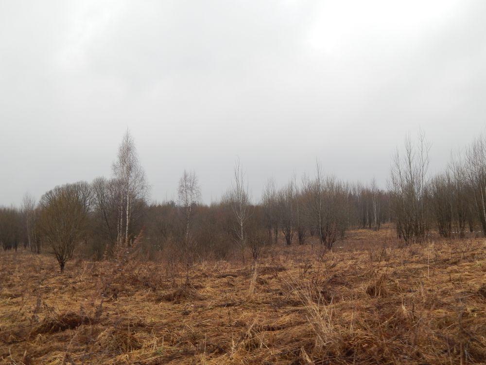 В Краснохолмском районе порядка девятисот гектаров сельхозугодий не используются по назначению