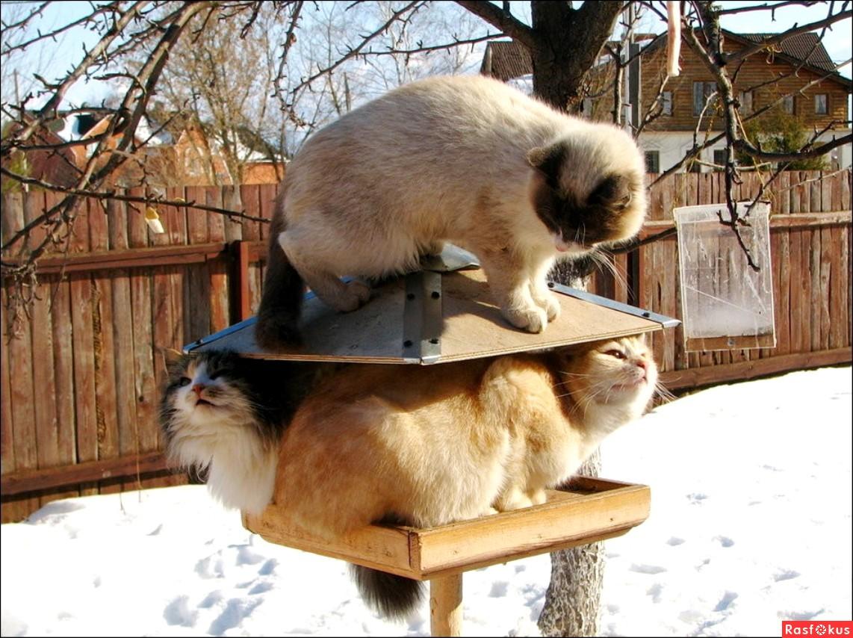 Орнитолог расскажет, как правильно кормить птиц зимой в Твери