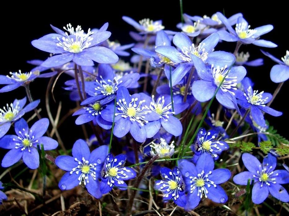 В Конаковском районе зацвели майские цветы