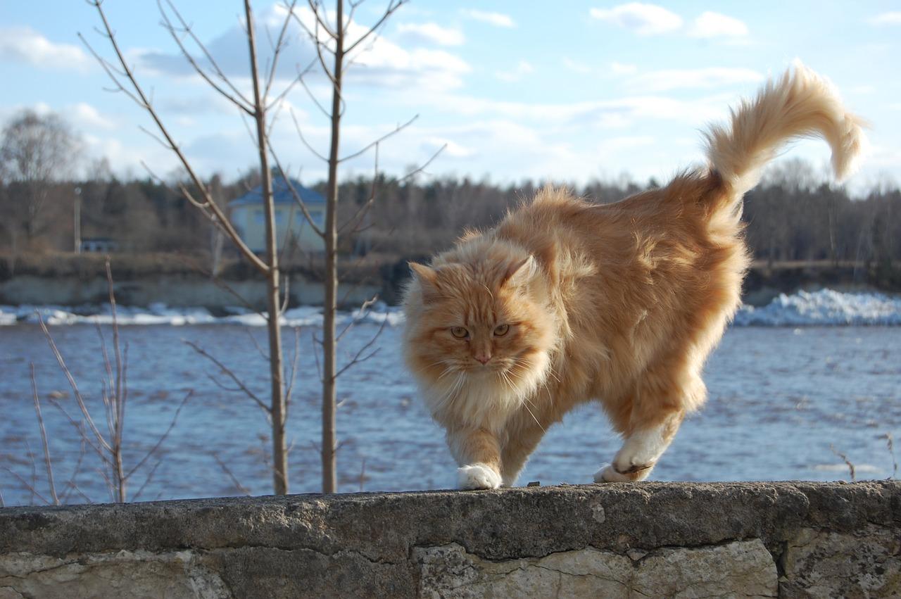 В Тверской области ожидается сильный ветер