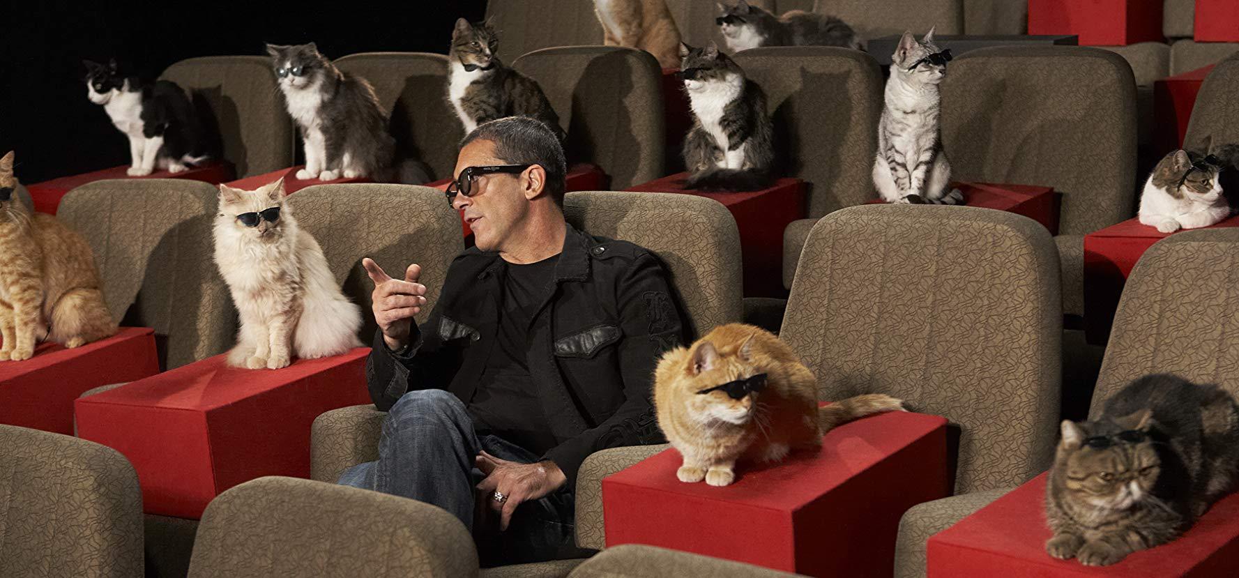 Жителей Твери приглашают посмотреть кино в компании котиков