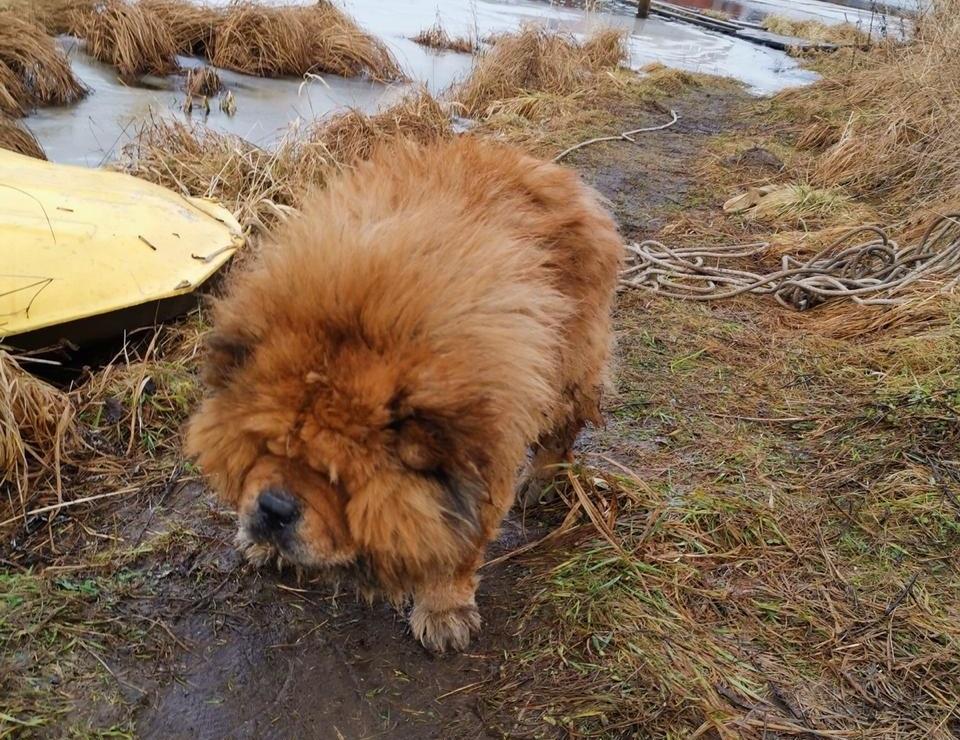 Тонущего песика спасли в Тверской области