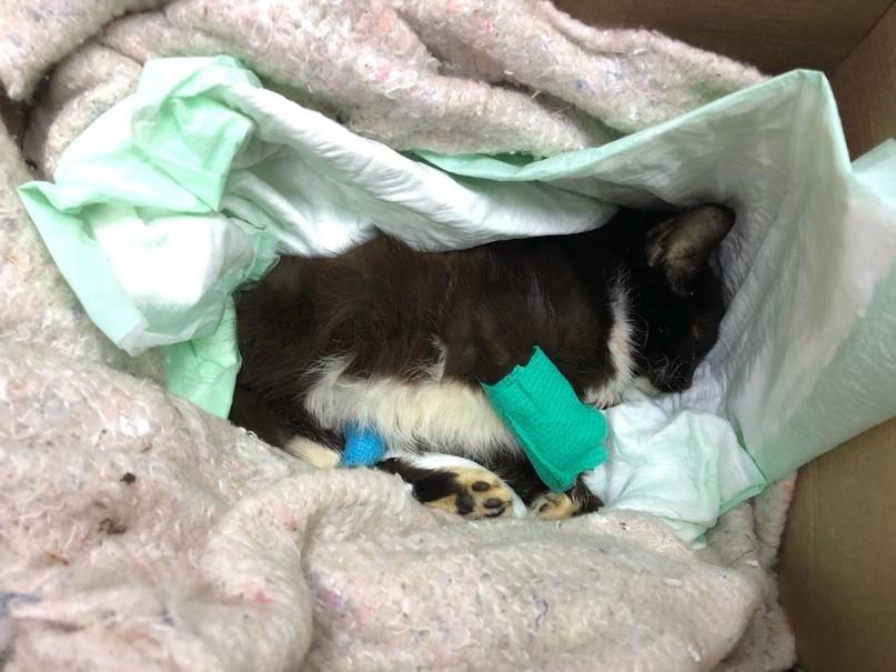 Упитанный котик из Твери спас больного котенка